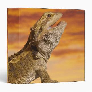 Bearded dragon (Pogona Vitticeps) on rock, Binder