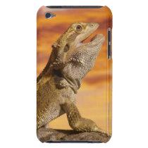 Bearded dragon (Pogona Vitticeps) on rock, Case-Mate iPod Touch Case