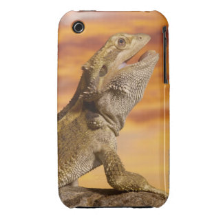 Bearded dragon (Pogona Vitticeps) on rock, iPhone 3 Cover