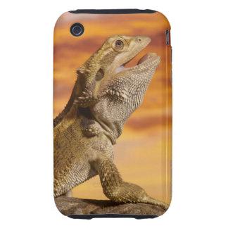 Bearded dragon (Pogona Vitticeps) on rock, iPhone 3 Tough Case