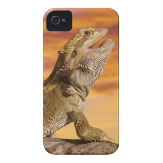 Bearded dragon (Pogona Vitticeps) on rock, iPhone 4 Case