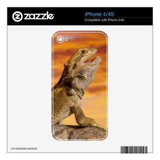 Bearded dragon (Pogona Vitticeps) on rock, iPhone 4S Skins