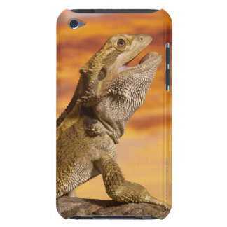 Bearded dragon (Pogona Vitticeps) on rock, iPod Touch Cases