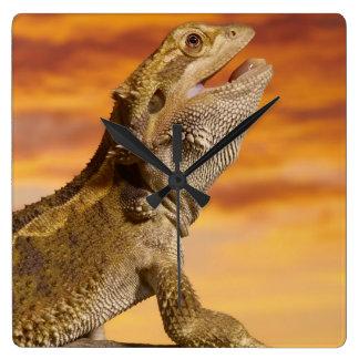 Bearded dragon (Pogona Vitticeps) on rock, Square Wall Clock