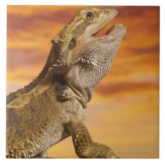 Bearded dragon (Pogona Vitticeps) on rock, Tile