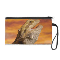Bearded dragon (Pogona Vitticeps) on rock, Wristlet Purse
