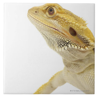 Bearded dragon (Pogona Vitticeps) Ceramic Tiles
