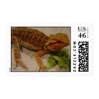 Bearded Dragon - postage stamp