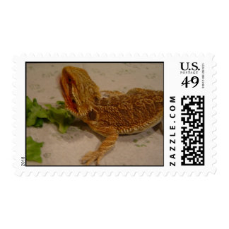 Bearded Dragon Postage
