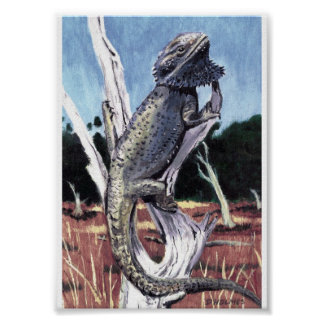 Bearded dragon posters