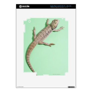 Bearded dragon skin for iPad 3