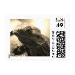 Bearded Dragon Stamp