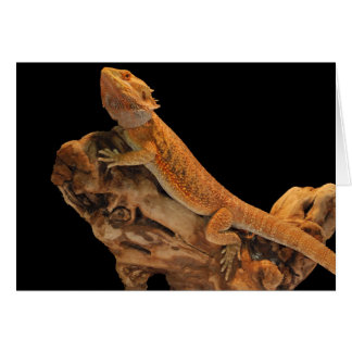 Bearded Dragon – Things Are Looking Up Card