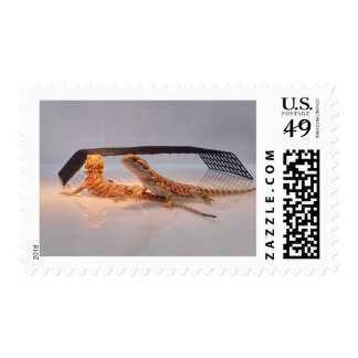 Bearded Dragons - Reflections Postage