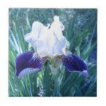 Bearded Iris Cultivar Mary Todd Ceramic Tiles