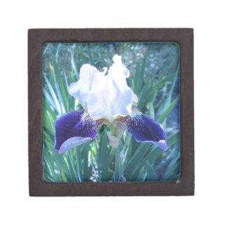 Bearded Iris Cultivar Mary Todd Keepsake Box