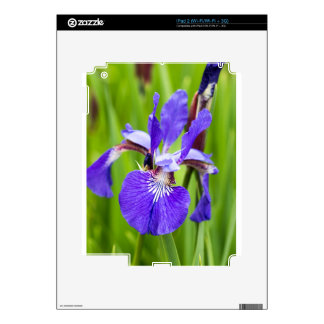 Bearded Iris Decals For The iPad 2