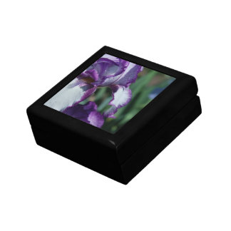 Bearded Iris Flower Gift Box