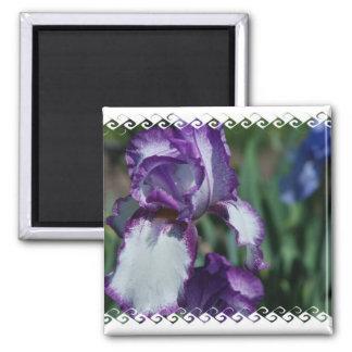 Bearded Iris Flower Magnet Fridge Magnets