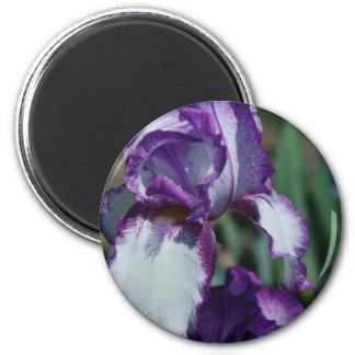 Bearded Iris Flower Magnet Refrigerator Magnets
