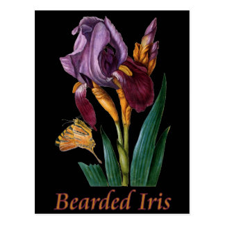 Bearded Iris Flower Postcard