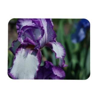 Bearded Iris Flower Premium Magnet Magnet