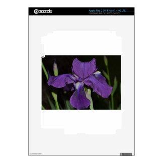 Bearded Iris in Purples iPad 3 Decals