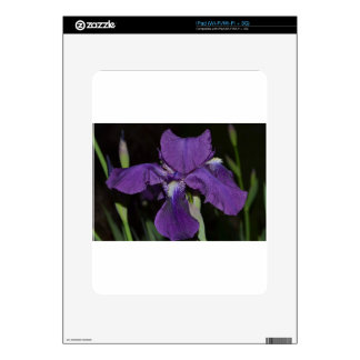 Bearded Iris in Purples Skins For The iPad