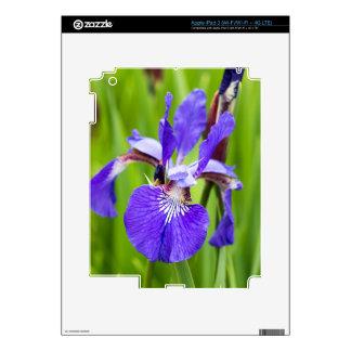 Bearded Iris iPad 3 Decal