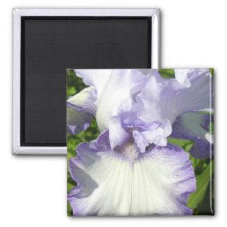 Bearded Iris Magnet Magnets