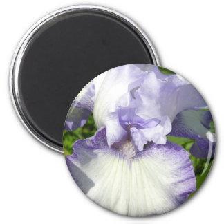 Bearded Iris Magnet Refrigerator Magnets