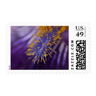 Bearded Iris Postage Stamp