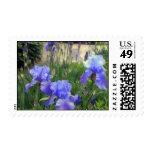 Bearded Iris Postage Stamps