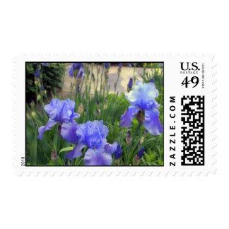 Bearded Iris Stamps