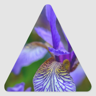 Bearded iris triangle sticker