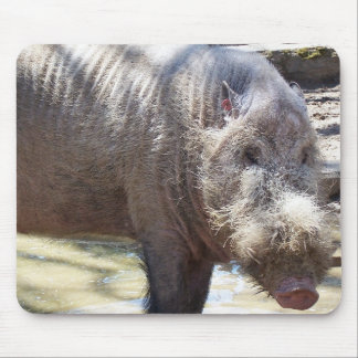 Bearded Pig Portrait Mouse Pad
