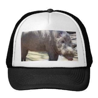 Bearded Pig Portrait Trucker Hat