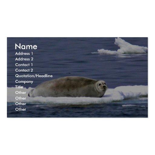Bearded seal business card