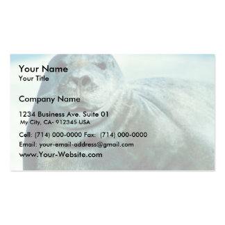 Bearded seal portrait business card template