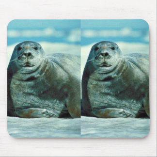 Bearded seal portrait mouse pad