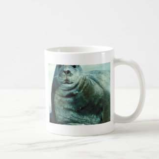 Bearded seal portrait coffee mugs