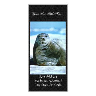 Bearded seal rack card template