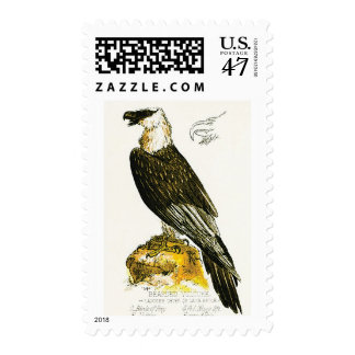 Bearded Vulture Postage Stamps