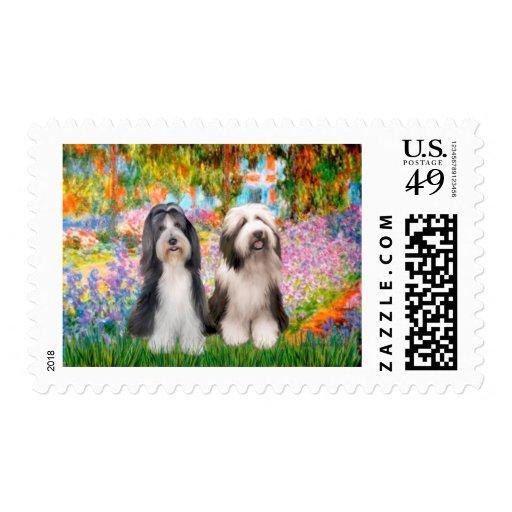 Beardie Pair 2 - Garden Postage Stamps
