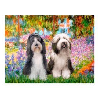 Beardie Pair 2 - Garden Postcard