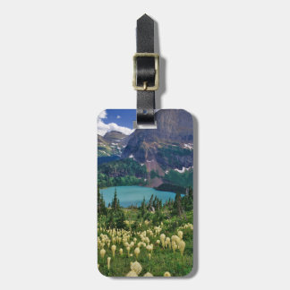 Beargrass above Grinnell Lake in the Many Bag Tag