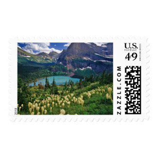 Beargrass above Grinnell Lake in the Many Postage