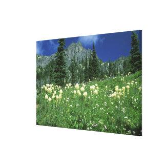Beargrass at Eunice Lake, Mt. Rainier NP, WA, Canvas Print