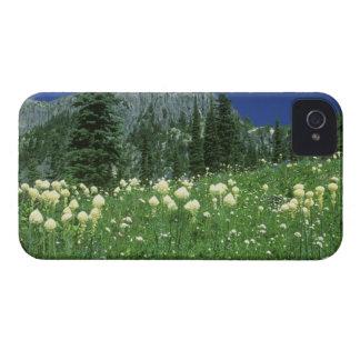 Beargrass at Eunice Lake, Mt. Rainier NP, WA, iPhone 4 Cover