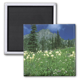 Beargrass at Eunice Lake, Mt. Rainier NP, WA, Magnet